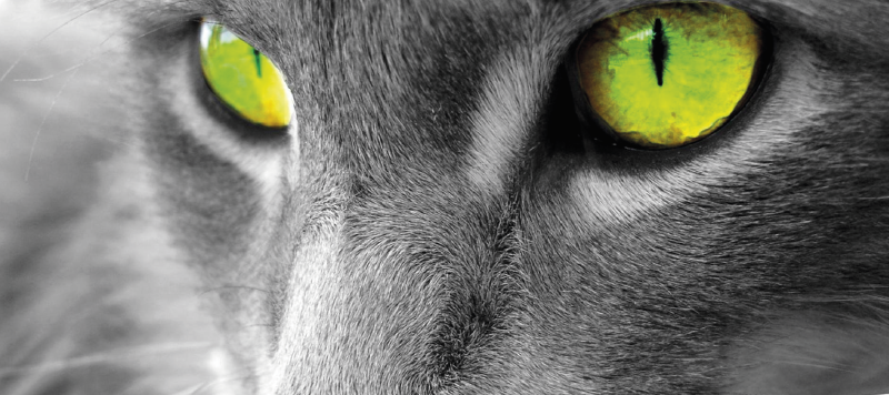 TENSTICKERS. 緑のキャットアイオリジナルマウスパッド. 猫の顔をクローズアップした猫のマウスパッド。猫の目は信じられないほどの緑の色合いです!高品質。