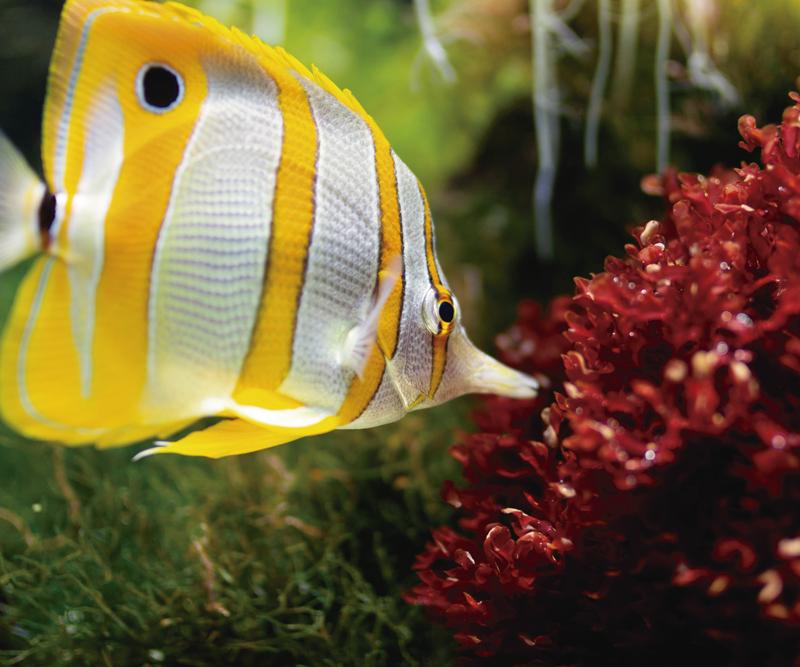 TenVinilo. Alfombrilla ratón XXL imagen coral pez amarillo. Alfombrilla gaming xxl de pescado para usar su ratón mientras trabaja o juega con la ordenador. Alta calidad ¡Envío a domicilio!