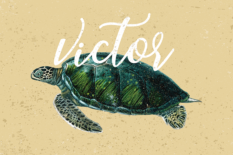 TenStickers. Sea turtle with name turtle vinyl placemats. Be creative and make your meals more enjoyable by decorating your table with this magnificent personalized name placemats.