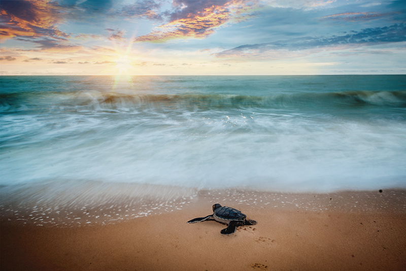 TenStickers. Sunset with turtles turtle vinyl placemats. Have a peaceful meal in the comfort of your home with these wonderful placemats with turtles. +10,000 satisfied customers.