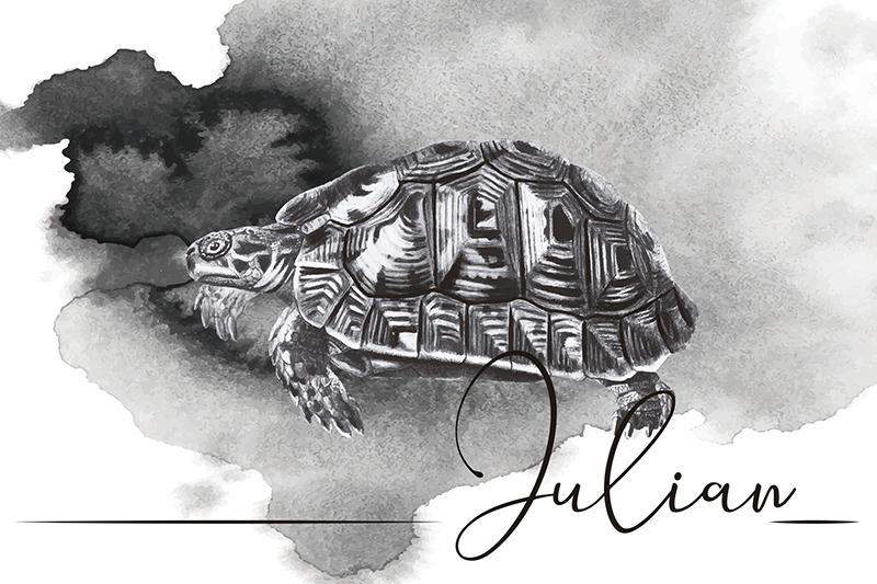 TenStickers. Set de table en vinyle tortue dessinée main. Soyez le meilleur hôte de la ville avec ces sets de table personnalisés avec un design d'une tortue dessinée à la main le un nom de votre choix.