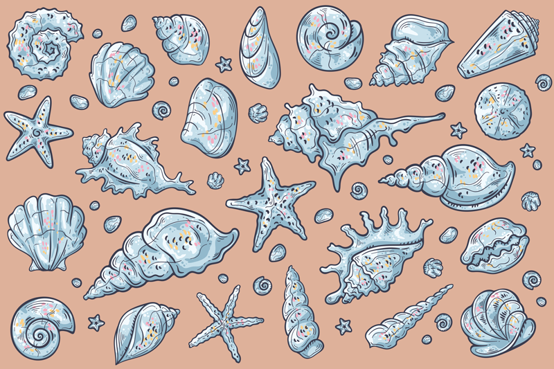 TenStickers. Seashell Sketches shell placemats. vinyl placemats with seashells featured with various seashell on subtle coloured background. They are very easy to clean.