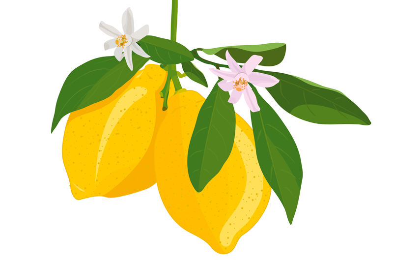 TenStickers. Floral Lemon citrus table mat. Citrus placemat which  features a lovely image of some lemons on a branch with white flowers. Anti-bubble vinyl. High quality.