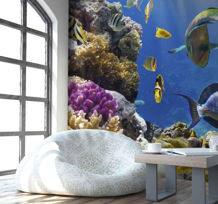 TenStickers. Fotobehang zee de onderwaterwereld van curaçao. De onderwaterwereld vancuraçao! Onderwaterwereld fotobehang, leuk voor de woonkamer! Geniet van dit leuke tropische zeedieren fotobehang!