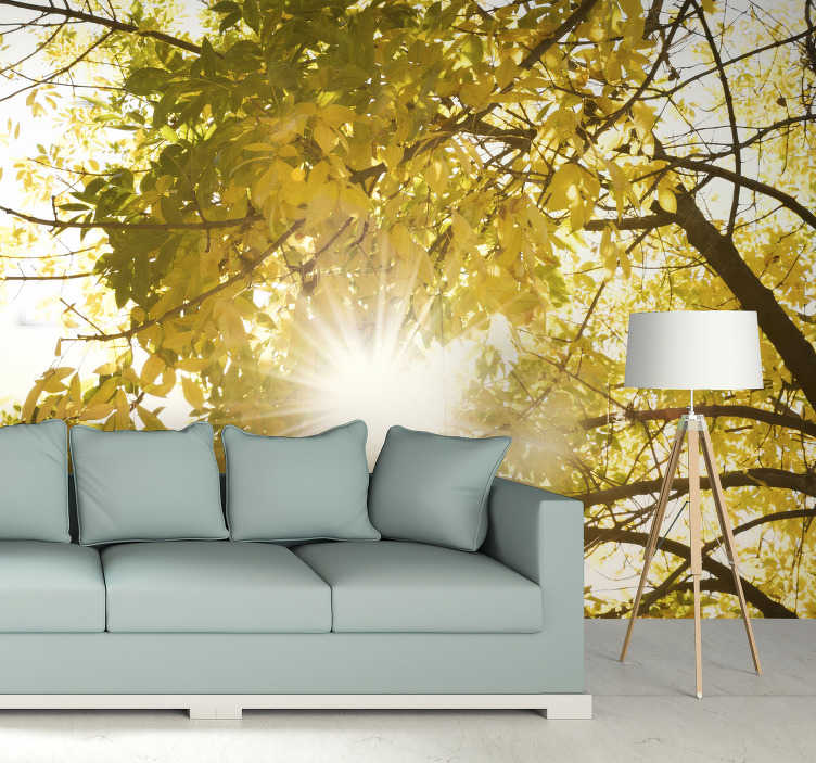 TenStickers. Sunlight glimpsing through a tree Forest Wall Mural. Bring the beautiful outdoors into your home with ease with this forest wall mural. Fantastically priced, superb quality, made to fit into any home