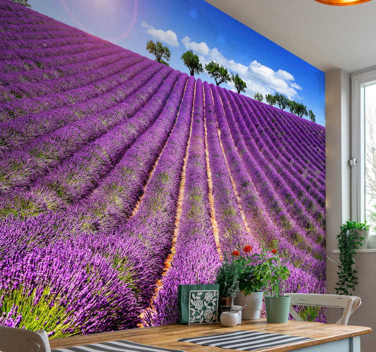 TenStickers. Lavender field mural wallpaper. Fantastic lavender flower wallpaper that you can use to decorate your living room or bedroom in an exclusive way. Easy to apply!