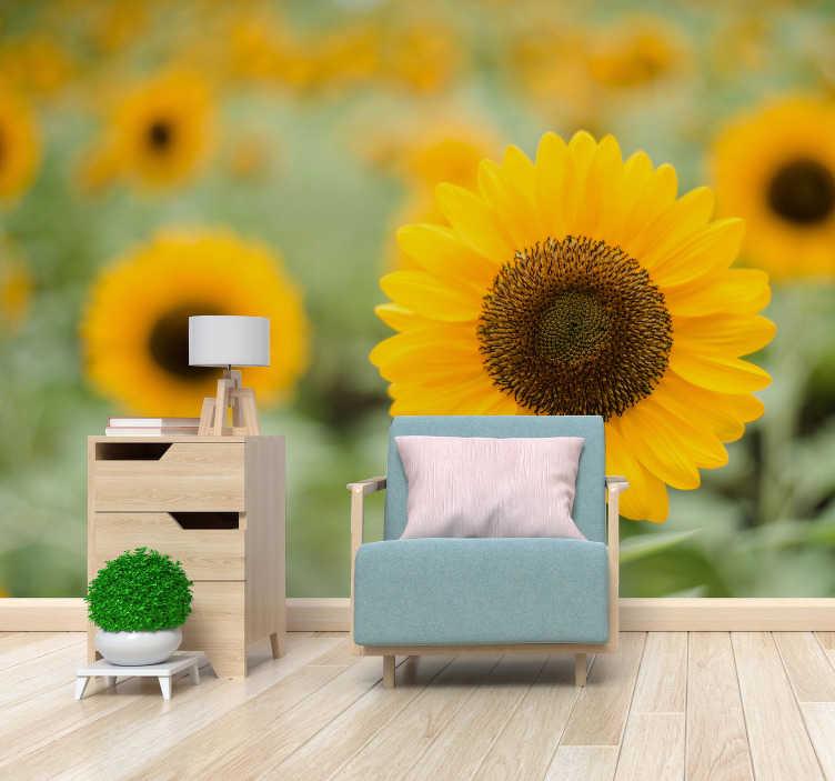 TenStickers. Zonnebloemveld muurschildering. Deze bloemenfotobehang zal uw huis doen schitteren! De prachtige zonnebloemen zijn een vrolijk teken van de zomer en goede tijden.