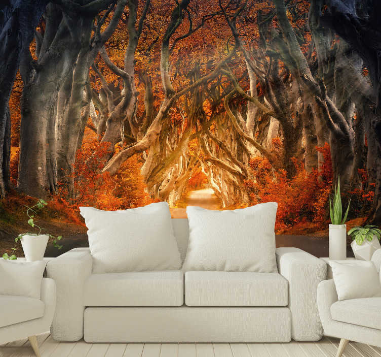 TenStickers. Autumn sunrise  Forest mural. Forest photo wall mural of a forest in the beautiful autumn period on which the sunrise is depicted. Don't wait any longer and decorate your home!