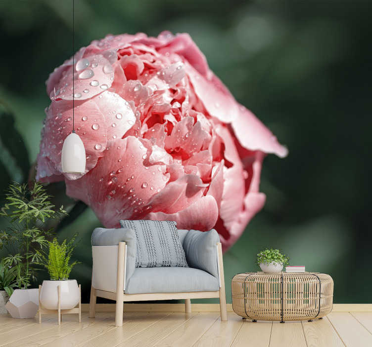 TenStickers. Wet Peoni flower mural wallpaper. Bringthis beautiful nature wallpaper photo into the space where you like to spend your time and make it even more special!