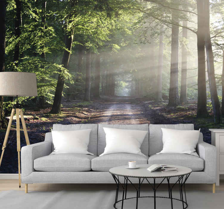 TenStickers. Sun lit road in a forest tree wall mural. Travel on this road, lit in the sunlight, who cares where it goes when you are surrounded by a forest. Captivating forest wall mural to decorate with