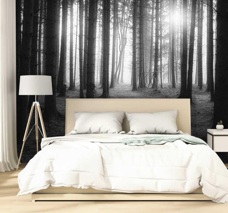 TenStickers. Photo murale paysage Forêt Grise. Cette photo murale chambre représente une forêt en noir et blanc, baignée par le soleil. Un design parfait pour donner une atmosphère rafraîchissante.