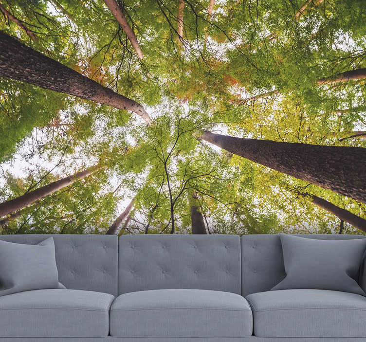 TenStickers. Big trees in woodland landscape wall mural. Here you can bring nature into your home and imagine the fresh air of the trees being blown loose in your home with