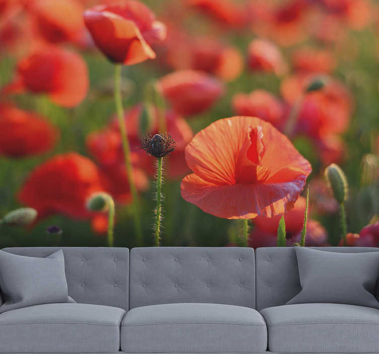 TenStickers. Bright red poppy flowers Wall Mural. Bring some flowers home with this flower wall mural that shows a bunch of beautiful poppies growing on the meadow. High quality image!