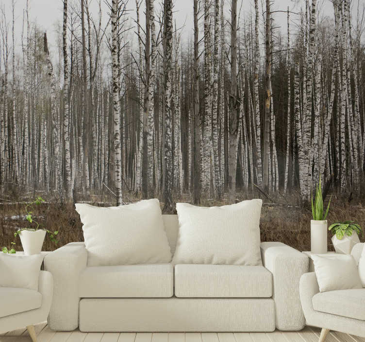 TenStickers. Grey birch forest landscape wall mural. A rather mysterious vibe surrounds this grey birch forest wall mural. Buy it now to experience a mystical atmosphere at home.
