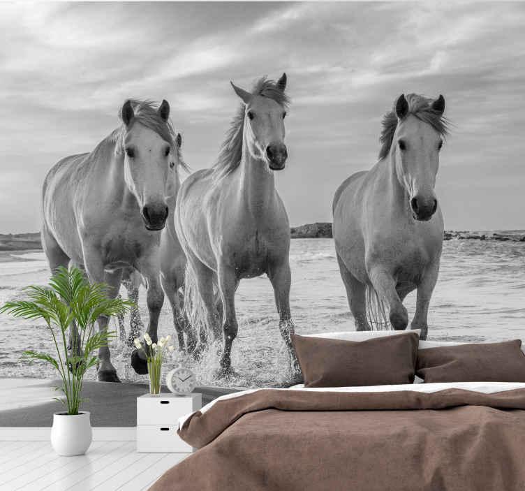 TenStickers. Cavalos correndo papel de parede fotomural vinílico. fotomural vinílico de animais com desenho de três cavalos correndo no campo, foto em preto e branco que vai dar um toque clássico ao espaço onde você a aplicar.