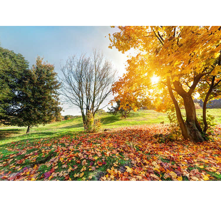 TenStickers. Autumnal morning forest wall mural. Step into autumn with this forest wall mural! With the season just turning this wall mural brings a large sense of life into your home