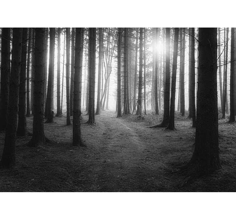 TenVinilo. Fotomural de paisaje bosque blanco y negro salon. Estupendo fotomural paisaje de un bosque en tonos blanco y negro con el que podrás decorar tu salón a tu propio estilo. Fácil de colocar.