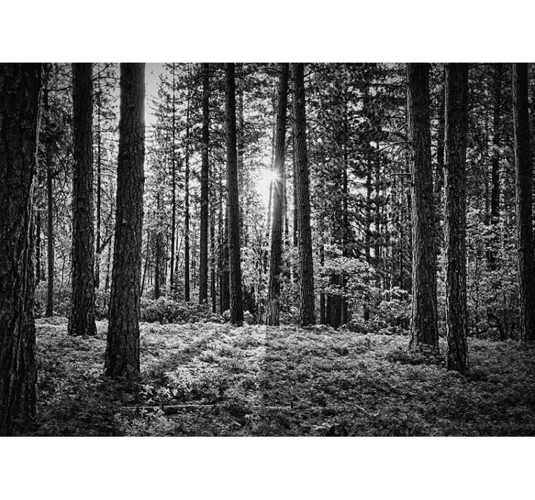 TenStickers. Black and white forest tree wall mural. A serene forest scene in stunning black and white. Decorate your home in the most beautiful way possible with this forest wall mural.