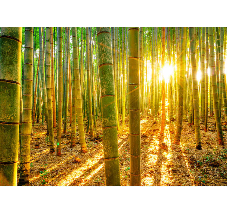 TenStickers. Bamboo forest in sunlight zen photo wallpaper. A vast forest of bamboo, basking under the beautiful rising sun. Decorate your home with this stunning bamboo wall mural