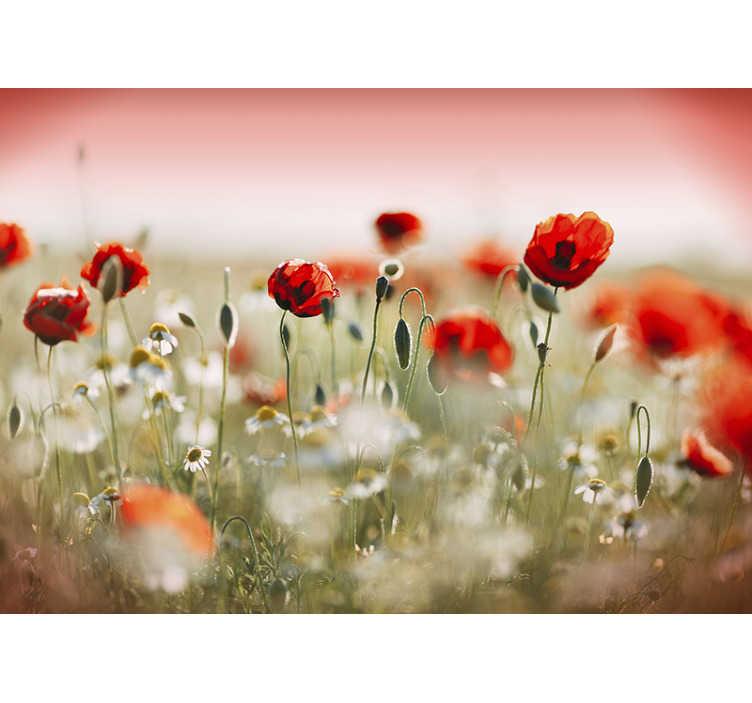 TenStickers. Poppy field Wallpaper Photo. Fantastic red flower dining mural to bring joy and color into your home with a design you won't be able to miss. Our product is of first quality.