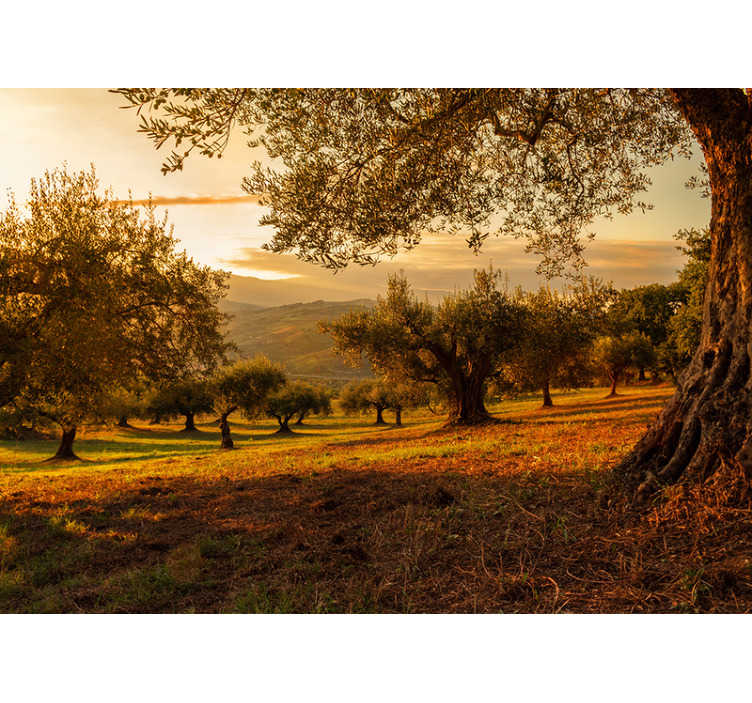 TenStickers. Olive trees landscape wall mural. Fantastic photomural landscape for Andalusian olive groves wall with which you will decorate your house in an original and unique way.