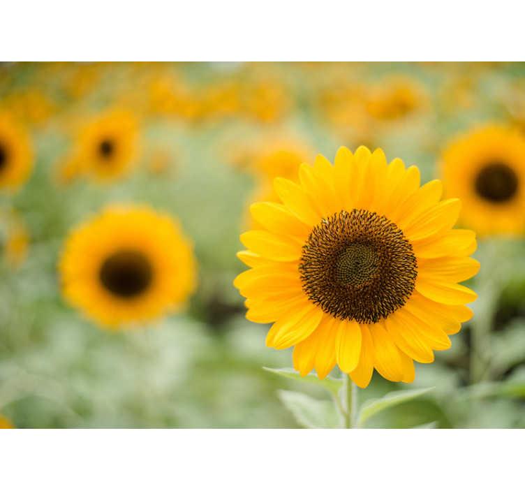 TenVinilo. Papel mural prado girasoles de frente. ¡Este fotomural de flores de girasoles hará brillar tu hogar! Los hermosos girasoles son un signo de alegría y felicidad ¡Envío gratuito!