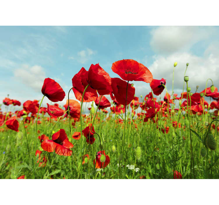 TenStickers. Huge poppy field Poppy Wallpaper Photo. This floral photo wallpaper shows a huge field with beautiful poppies. The bright red will be the highlight of your home!