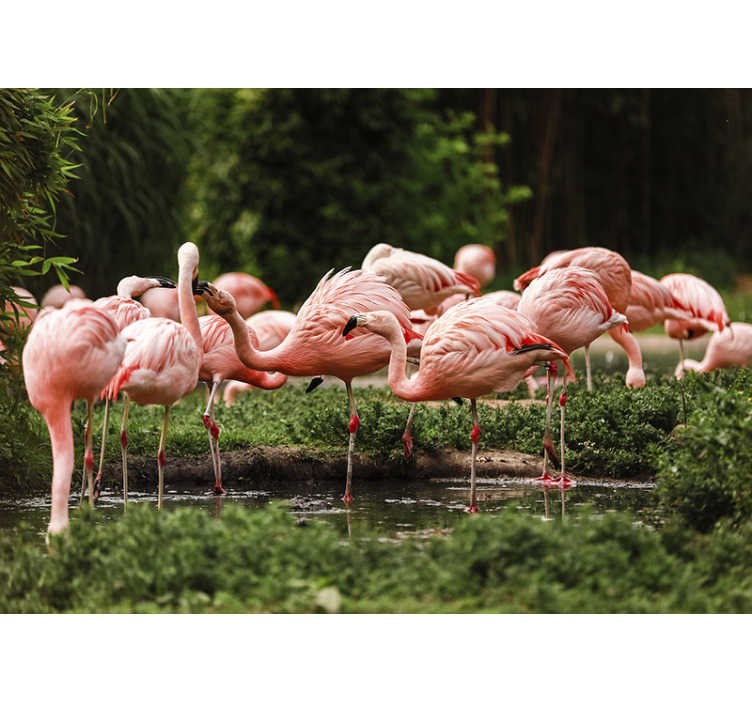 TenStickers. Flamingo group mural wallpaper. This animal photo mural shows a group of pink flamingos in the nature The great colors of this product will be the perfect decoration for you!