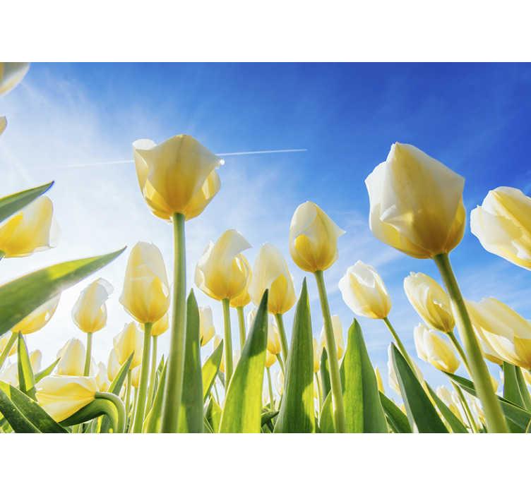 TenStickers. Hvid tulipan landskab blomst vægmaleri. En hvid tulipanblomstlandskab vægmaleri på en blå baggrund, der vil være dejlig i dit køkken eller ethvert sted efter eget valg. Let at anvende design.
