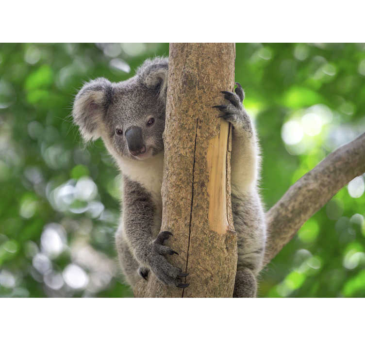 TenStickers. Koala Baby on Tree wall mural. This animal wall mural showing a cute baby koala on the tree will be a perfect decoration for your living room or bedroom. Enjoy wildlife from home!