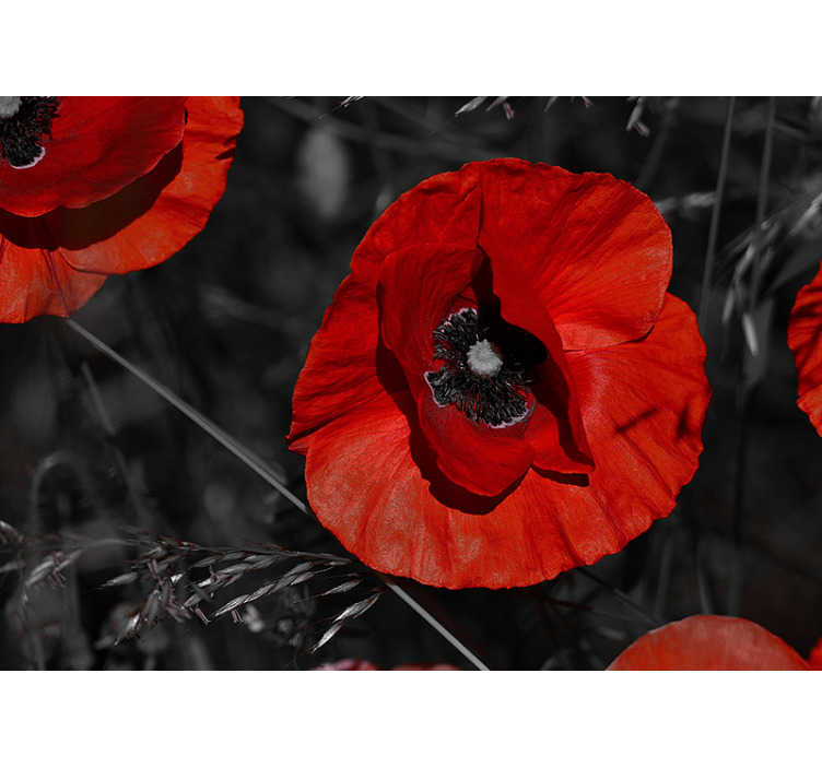 TenStickers. Blossom Poppy Flower Wallpaper Photo. Gorgeous flower wall mural of a blossom poppy in a dark background that will bring life and color to your livingroom or bedroom.
