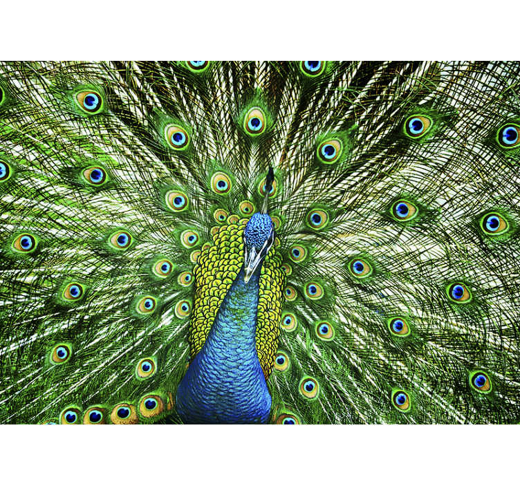 TenStickers. Peacock mural wallpaper. This colourfull animal wall mural can be applied to any space where you will be happy to admire it. Make your home better with this beautiful design.