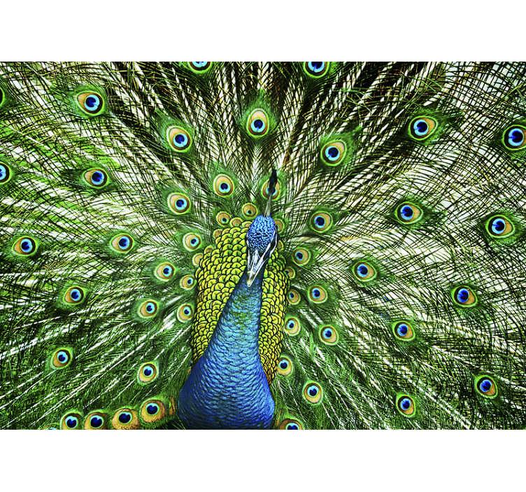 TenStickers. 孔雀壁画壁纸. 这种彩色动物壁画可用于您乐于欣赏的任何空间。精美的设计让您的家更好。