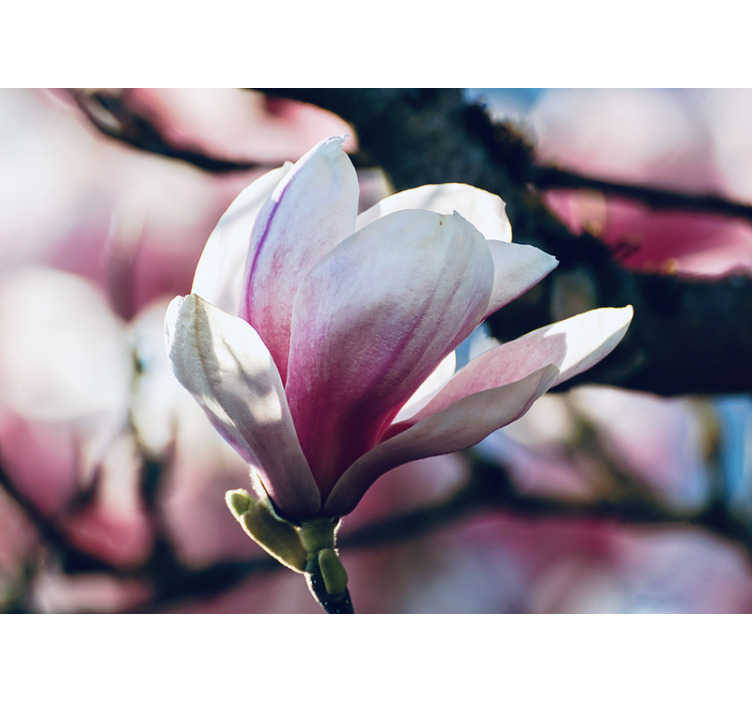 TenStickers. Spring Magnolia flower wall mural. Our  spring magnolia in a flowering position wall mural. Receive your visitors with relaxation by taking them into your home!
