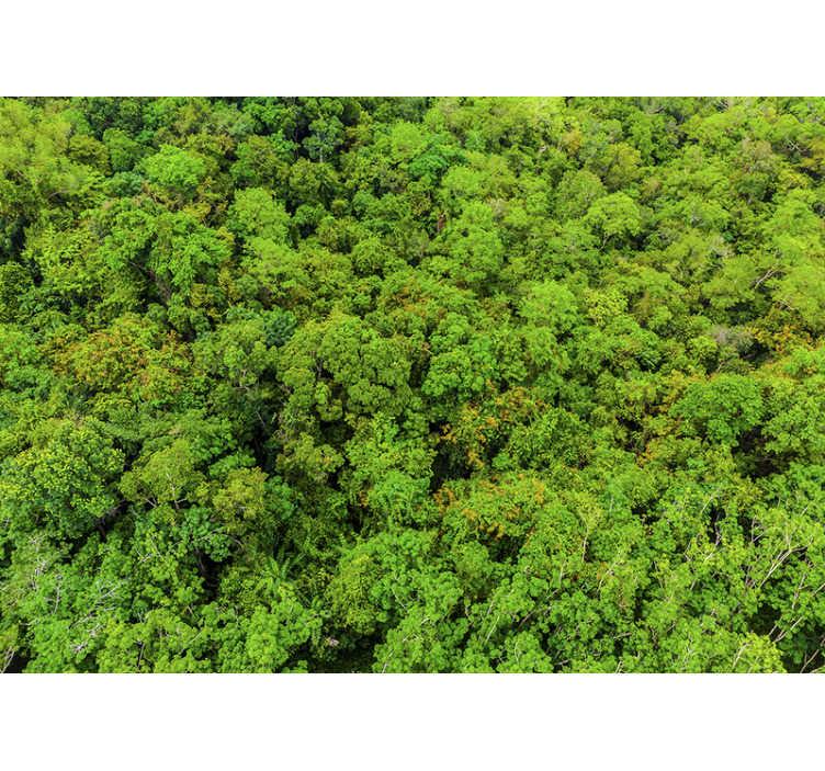 TenStickers. 空中森林照片墙壁画. 一张空中森林照片墙壁画,向您展示森林的广阔表面,并用森林的美丽照片墙壁画装饰您的房屋。