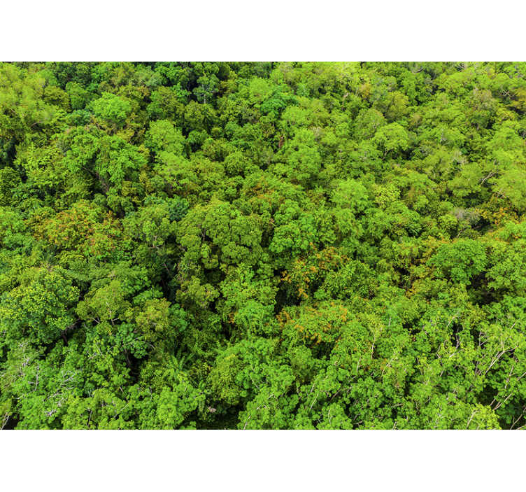 TENSTICKERS. 空中森林写真壁壁画. 森林の広い表面を示し、森の美しい写真壁画で家を飾る空中森林の写真壁画。