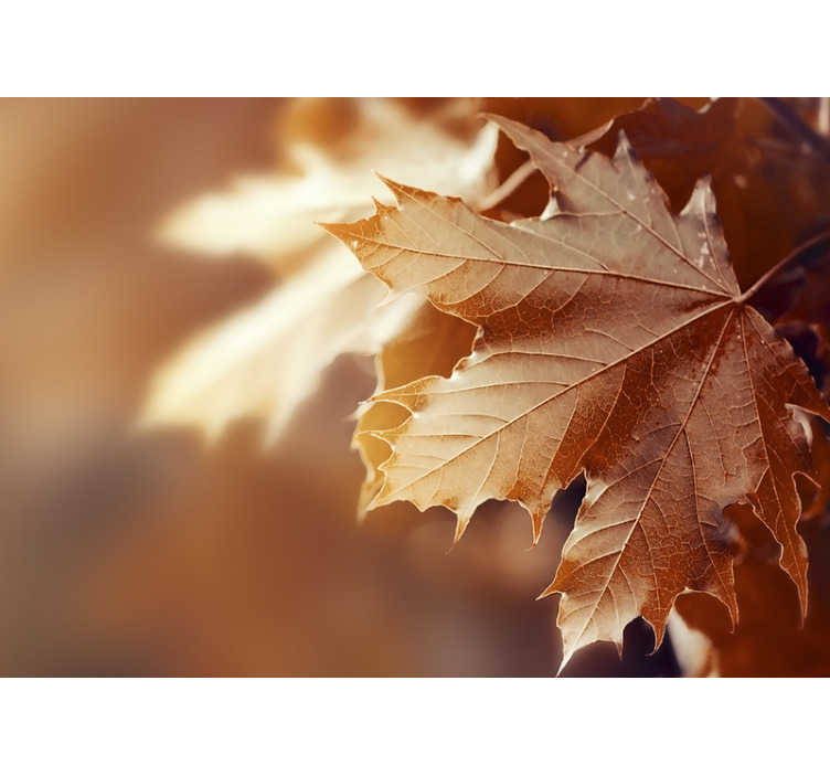 TenStickers. Autumn leaf mural wallpaper. This pretty photo wallpaper shows an orange leaf in autumn with a blurry background The beautiful and bright colors will impress!