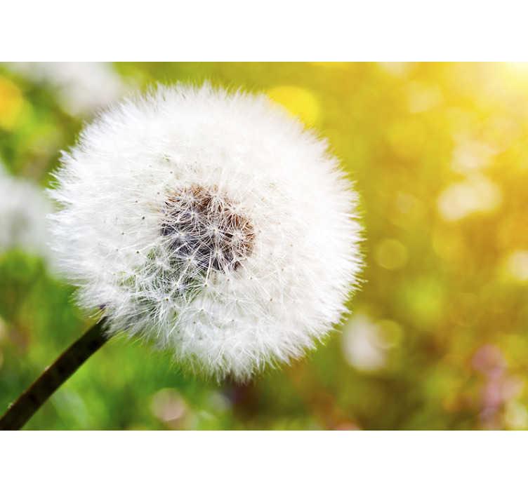"""TenStickers. Фотообои """"Одуванчик на солнце"""". Это красивое фотообои показывает хрупкий цветок одуванчика с солнцем на заднем плане, с которым у вас есть идеальное украшение!"""