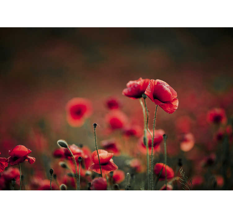 TenStickers. Beautiful Poppy Wall Mural. Enjoy the beautiful finish that this flower wall mural will give to your walls and the imagination that it will give you, that you are among them.