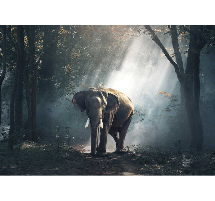 TenStickers. Elephant in forest mural wallpaper. This beautiful forest wall mural shows images of an Elephant in the forest on his own, and therefore definitely something you can't miss!