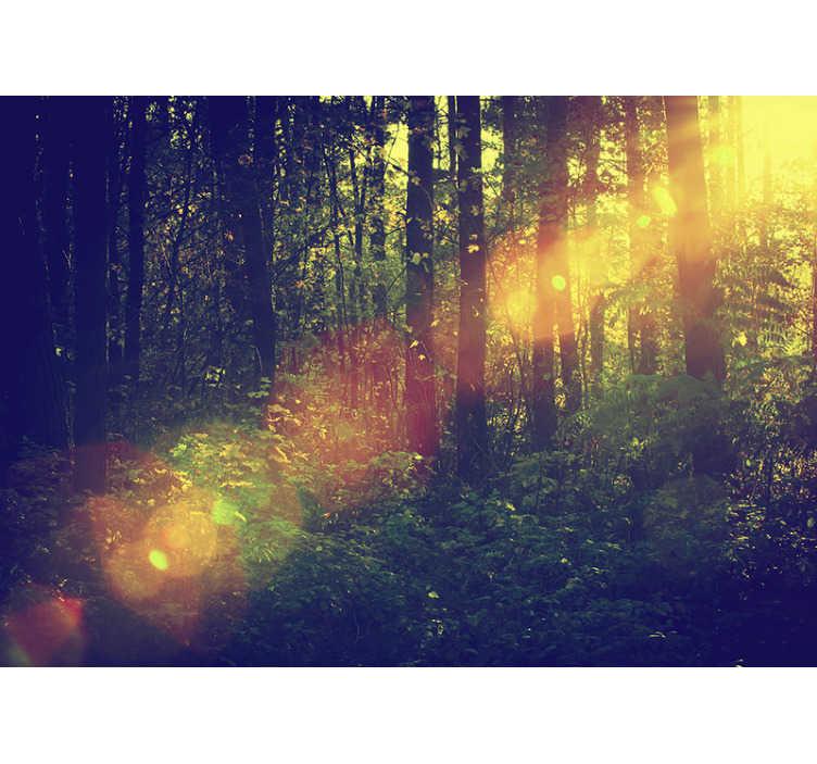 TenStickers. Natur Tapete Laubwald. Wenn Sie ein Naturliebhaber sind, ist diese Tapete der Waldszene perfekt für Sie. Es gibt viele grüne Bäume und Sonnenstrahlen.