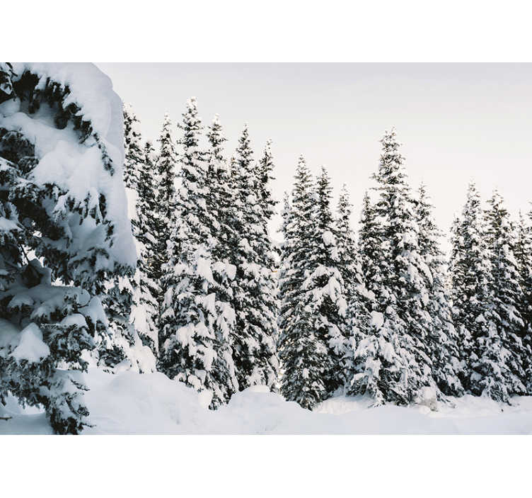 TenStickers. Snowy pine tree forest Wall Mural. This Snowy pine tree forest wallpaper is a nice view for when you are a real snow lover, and want to pass on your love for it in your home.