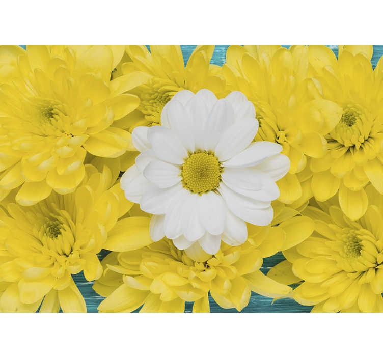 TenStickers. Fototapeta żółta i biała stokrotka. Zamów te wyjątkowe fototapety z kwiatkami i udekoruj swój dom w fenomenalnym stylu. Dostępne zniżki i rabaty!