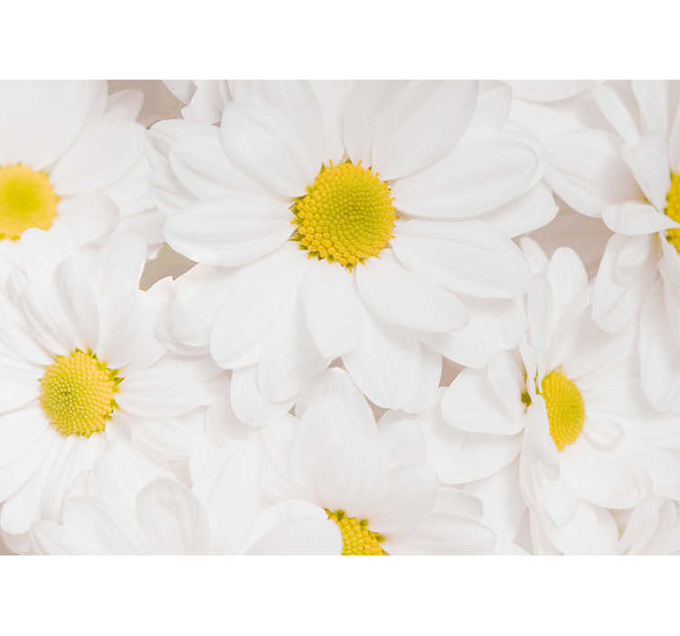 TenStickers. Pure white daisy flowers mural wallpaper. Make a difference on the walls of your home with our pure white daisy flowers photo wallpaper, which shows the beautiful white flowers.