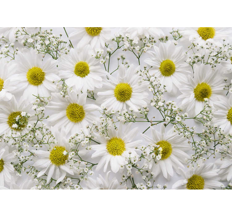 TenStickers. Photo murale fleurs marguerites. Décorez les murs de votre maison avec cette belle conception de fleur de marguerite blanche. Ajoutez de la décoration à vos murs dont vous pourrez profiter longtemps.
