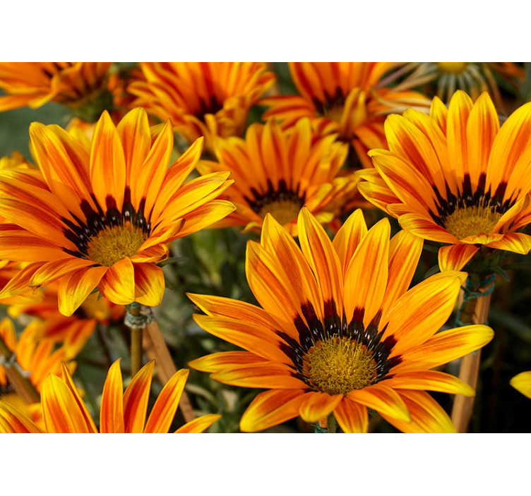 TenStickers. Beautiful sunflowers flower wall mural. On this photo wallpaper of sunflowers you get an image of some sunflowers with their beautiful orange/yellow colors to bright up your room.