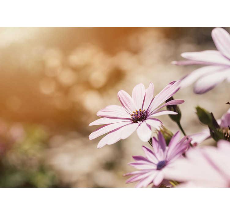 TenStickers. Krásná sedmikráska květ nástěnná malba. Jak krásná je tato růžová sedmikráska fototapeta?! Představte si je nyní na stěnách vašeho obývacího pokoje! Rozhodně to není špatný nákup!