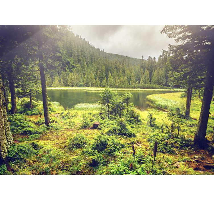 TenVinilo. Papel mural naturaleza bosque verde con destello. Disfrute de su bosque privado con este fotomural pared de árboles sin importar si llueve afuera. Imagen de alta calidad ¡Envío gratuito!