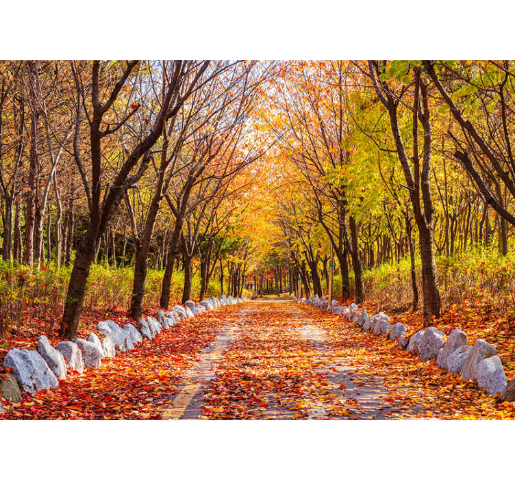 TenStickers. Autumn tree landscape wall mural. Order this autumn forest wallpaper full of subtle, warm colours and trees. Get your hot chocolate or spicy tea and ejnoy this spectacular view!