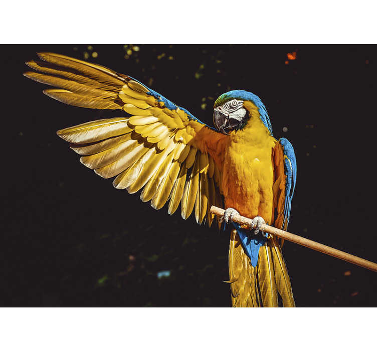 TenStickers. tropical bird mural wallpaper. Enjoy the tropical parrot photo wallpaper where the bird can be seen on a branch, with its wings spread open. This will look beautiful on your walls.